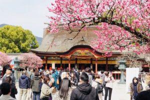 太宰府と梅の花